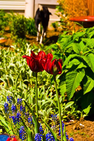 may_garden